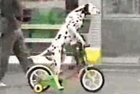 dogonbike